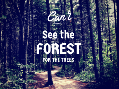 Cant-See-The-Forest-For-The-Trees-Optimised