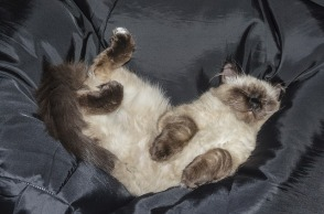 cat-1584543_640
